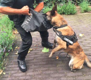 Speurhondendemo tijdens de dag van de hond
