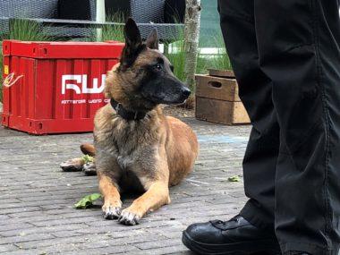 Dag van de (speur)hond